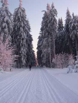 Vorschau Skisport im Winter