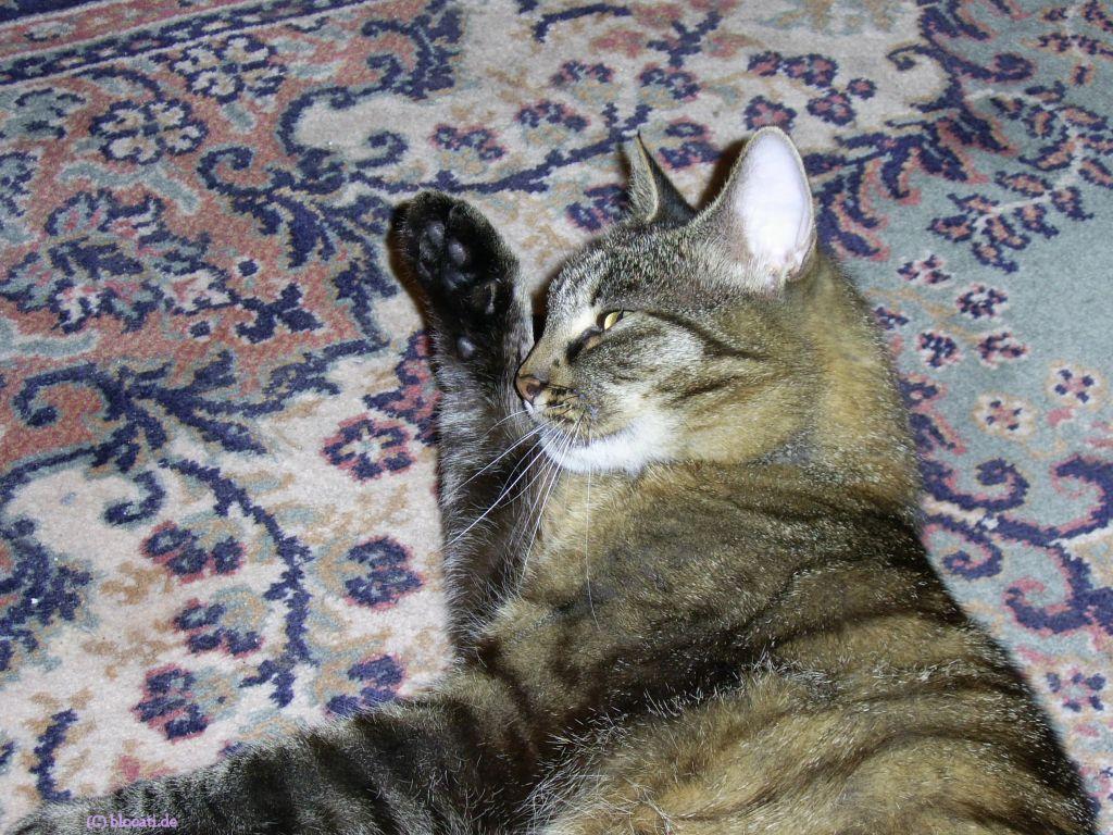 wie lange kann eine katze ohne nahrung und wasser berleben planzen und tiere. Black Bedroom Furniture Sets. Home Design Ideas
